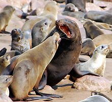 Stop Nagging Me!!! - Namibia Africa by Beth  Wode