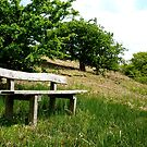 A Bench Above Redmire by Mat Robinson