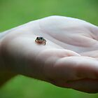 Tiny Frog by photosbykt