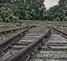 Tracks by Phillip M. Burrow