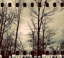 Vintage Trees - Film Overlay by Ashley Frechette