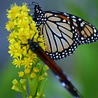 sweet nectar by ilis  Finnerty Warren