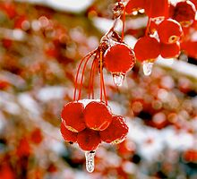 Frozen Red Berries by MoonLiteStudio