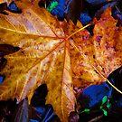 Fall's Fallen by Devalyn Marshall