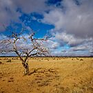 Lonely Tree - Steinfeld, South Australia by AllshotsImaging
