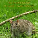 Funny Birthday Card - Wild Brown Rat  by Moonlake