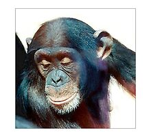 Smug - Chimpanzee #1 - Postcard by Michelle Bush