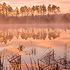 Louisiana Bayou at Dawn by wsteed04