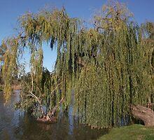 willow tree by jordyn sleep