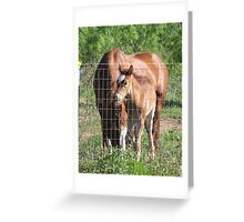 New Foal! Greeting Card