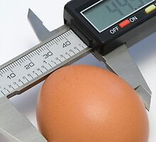 Egg under calibration by igorsin