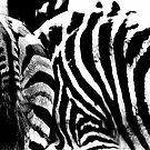 Zebra by AnaBanana
