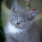 Baby Kittens Face by Sunshinesmile83