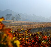 Autumn Vineyard haze Cape Town by Neil  Bradfield
