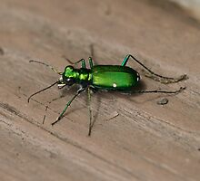 Green Bug by noffi