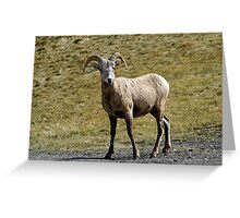 Young Ram  Greeting Card