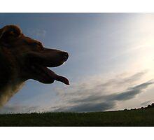 Dusky Dog Photographic Print