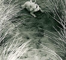 dune by Elodie