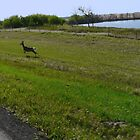 Mule Deer racing The Truck by MaeBelle
