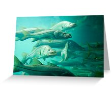 Snook Greeting Card
