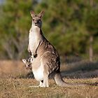 Kangaroo and her joey by Anna Calvert