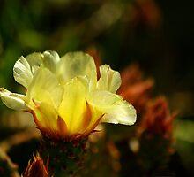 Desert Bloom by Vicki Pelham