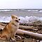Gracie, Lake Superior and the huge winds at Pebble Beach by loralea