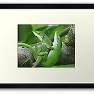 Framed Anole Mating by JeffeeArt4u