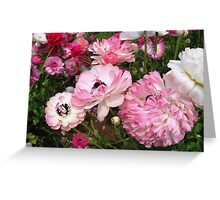 The beauty of the Ranunculus Greeting Card