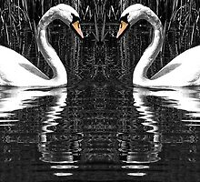 Swans in Love by Ian Elmes