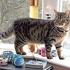Cat on Windowsill by Ann Miller