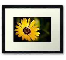 Summer is Coming Framed Print