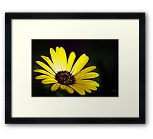 Summer is Coming 2 Framed Print