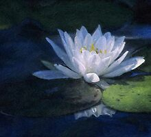 Water Lily by Cheryl L. Hrudka