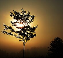 Tree Full Of The Morning Sun And Fog by Jeff Holbrook