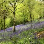 Bluebell Dream  by Donna-R
