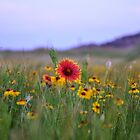 Prairie Wildflowers by Jerome Petteys