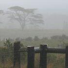 One Misty Moisty Morning by ronholiday