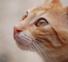 Cat in Crete by SweetLemon
