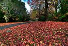 Mt Mount Wilson | NSW | The Blue Mountains | Australia | Autumn Wonderland by DavidIori