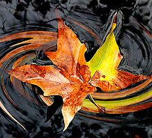 Leaf in Water_Pasadena, CA by Ron Regalado