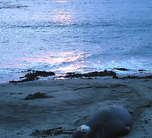 Beached for the NIght by Cupertino