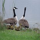 Family outing by Inquisitive4now