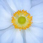Arty Macro  by relayer51