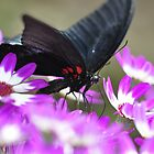 Butterfly with a Purple passion by Darren Bailey LRPS