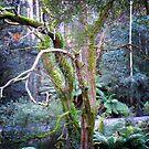 Tasmanian  fantasy by Elaine Game