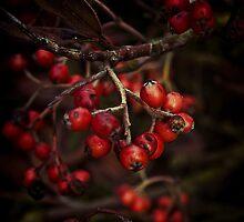 Very Berry #1 by Magicbenja