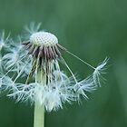 Seedy by Rachel Sonnenschein