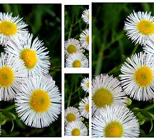 Fleabane Fiasco by Debbie Meyers