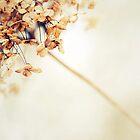 Flecha by Alain Baumgarten